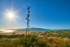 NZ Travels  - Paraparaumu Beach 01 (ArdieBeaPhotography) Tags: paraparaumubeach kapiti island coast shore beach sand haretails bunnytails grassseed dunegrass flax driftwood sunset sun lensflare dune pacific ocean sea glitter reflection