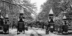 A dreaded winters day.... (chrisroach) Tags: manchester snow winter cemetery southerncemetery snowfall bw blackandwhite blackwhite monochrome england chorlton westdidsbury gates cemeterygates cemetrygates