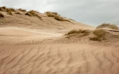 follow the ligne (ylemort) Tags: sea seascape nature nopeople nordzee beach belgique beautyinnature belgium beautiful wind sand march outdoors travel