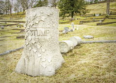 Stump's Stump (jmhutnik) Tags: cemetery stump winter february springhillcemetery charleston westvirginia grass trees headstone grave