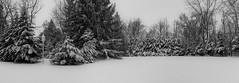 Mono Pano (karma (Karen)) Tags: baltimore maryland backyard trees snow panos bw hss iphone cmwd topf25
