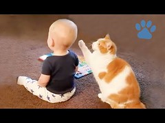 Funny Animals and Babies (videosloving) Tags: cats dogs cuteanimals cutebaby cutedogs cutecats cutepuppy cutekittens justforfun justforlaugh amazing beautiful babies baby babyanimals babycats babydogs viralvideo video videosloving viral friendship animalslove animals funnyvideo funny funniest fails trynottolaugh trending latest laughter new