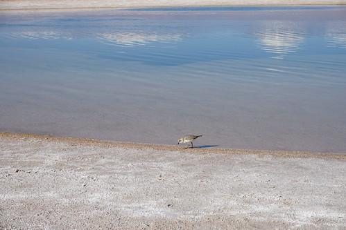 The Stone Lagoon (Laguna Piedra) at 2,400 meters (8,000 ft) above sea level, the Salar de Atacama, the Atacama Desert, San Pedro de Atacama, Chile.