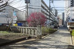 Tokyo.渋谷区東 渋谷氷川神社参道から (iwagami.t) Tags: iwagamitetsuo fujifilm fuji xt1 xf14mm japan tokyo city town urban street apartment 201902