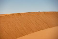 Midday break (s_andreja) Tags: mauritania chinguetti sand dune desert bird black