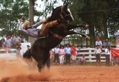 Souza e Pelagraia da Furacão (Eduardo Amorim) Tags: gaúcho gaúchos gaucho gauchos cavalos caballos horses chevaux cavalli pferde caballo horse cheval cavallo pferd pampa campanha fronteira quaraí riograndedosul brésil brasil sudamérica südamerika suramérica américadosul southamerica amériquedusud americameridionale américadelsur americadelsud cavalo 馬 حصان 马 лошадь ঘোড়া 말 סוס ม้า häst hest hevonen άλογο brazil eduardoamorim gineteada jineteada