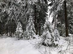 Winter 2019: Gummwald Arni (bei Gumm) (Martinus VI) Tags: winter winterlandschaft hivers schnee snow nieve neige emmental kanton canton de bern berne berna berner bernese schweiz suisse suiza switzerland svizzera swiss y190112 martinus6 martinus6xy martinus martinusvi