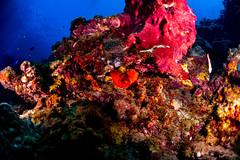 big eye fish (b.campbell65) Tags: stlucia animal beautiful bigeyefish blue caribbean colorful coral fish island marine nature ocean reef sargentmajor scenic scuba sea tourism travel tropical tropicalisland underwater water