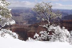 IMG_8650 (patterpix) Tags: grandcanyon arizona snow trees winter canyon storm