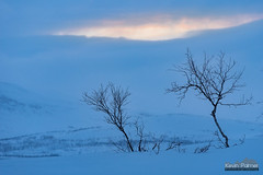 Hint of Color (kevin-palmer) Tags: finland finnishlapland arctic europe kilpisjärvi cloudy overcast march winter snow snowy scandinavianmountains evening birchtrees blue sunset dusk frozen lake sweden enontekiö nikond750 nikon180mmf28 telephoto saahkalahdensaari orange pink