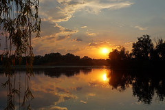 Quiet evening (anna-82v) Tags: evening summer clouds river dnieper water sky sunset nature landscape willow