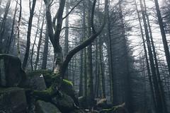 Rocket Tree (Gruenewiese86) Tags: 2018 harz hütte november sony a6500 wald forest forestscape fog nebel angst tod tot geheimnisvoll mystisch mystical germany holz baum himmel landstrase