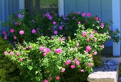 Rural Garden (austexican718) Tags: centraltexas hillcountry garden ranch rural fredericksburg gillespiecounty