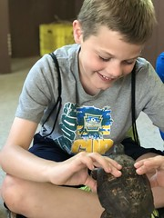 Box turtle lesson