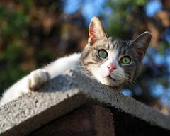 Cat (Engin Süzen) Tags: cat catportait cats catmoments catportrait animal animals pet m43 m43turkiye portrait olympus olympusem1markii olympusomdem1markii olympus45mmf18