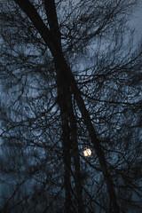 Kuu | Moon (Olli Tasso) Tags: kuu moon tree puu siluetti silhouette branches oksat vesi water river joki urjala outdoors nature abstract luonto abstrakti fineart reflection heijastus moody synkkä dark night yö finland suomi