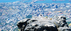 Cape Town Below (Steven.Harrison) Tags: southafrica honeymoon capetown city cityphotography photography landscape landscapephotography view scenery scenic rock bird focus dof adventure travel travelphotography
