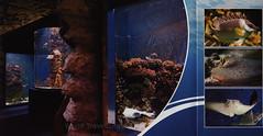 Nyíregyháza - Sóstó Zoo Ócenárium, A legek állatkertje…; 2017_2, Szabolcs-Szatmár-Bereg co., Hungary (World Travel library - The Collection) Tags: nyíregyháza sóstó zoo ócenárium ocenarium 2017 állatkert fish colors colours szabolcsszatmárbereg hungary ungarn magyarország travel center worldtravellib holidays tourism trip vacation papers photos photo photography picture image collectible collectors collection sammlung recueil collezione assortimento colección ads online gallery galeria touristik touristische broschyr esite catálogo folheto folleto брошюра broşür documents dokument