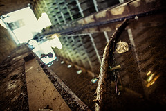Brickyard (Denis Tassin) Tags: sun soleil brickyard briqueterie belgium belgique fleurus wangenies factory usine abandonnée abandoned branch branche wood tree