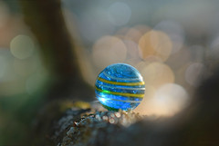 Misty Marble... (KissThePixel) Tags: marble marbles sunshine sunlight light woodland longacremanor tree trees nature makro macro closeup bokeh bokehlicious mist misty fog foggy stilllife creativephotography creativeart sigmaart sigma70200mm 28 f28 70200mm nikon nikond750 crystalball