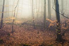 Into the light (Netsrak) Tags: baum bäume eu eifel europa europe forst landschaft natur nebel rheinland rhineland wald fog forest mist nature trees winter woods