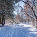 Winter Trail at Battle Creek Regional Park, Saint Paul, Minnesota