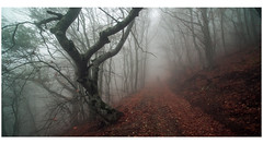 Crimea 3 (almaz zabbarov) Tags: forest mystic fog dark atmosphere landscape autumn