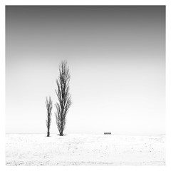 Winter - Growing up (Marco Maljaars) Tags: marcomaljaars minimalism minimal mood empty snow winter cold monochrome blackandwhite bw fineart landscape ice old tree trees winterscape growing bench