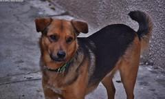 Jack (Mattia Deambrogio - Alternative Photos) Tags: jack my dog il mio cane