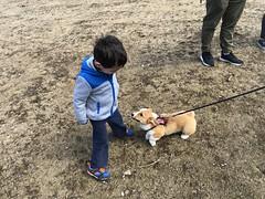 Point Pleasant Park (brownpau) Tags: iphonex canada novascotia halifax pointpleasantpark dog puppy corgi ezraordo ezra