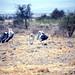 african safari 1983