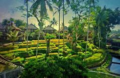 INDONESIEN, Bali , unser Hotel in Ubud, wunderschön, 17952/11173 (roba66) Tags: bali urlaub reisen travel explore voyages rundreise visit tourism roba66 asien asia indonesien indonesia insel island île insulaire isla hotel ubud textur texture effecte