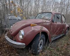 No punch backs. (Ewski Images) Tags: car classic antique junkyard cargraveyard bug beetle exploration rurex rural beautyindecay rustbucket vwgraveyard vw decay abandoned