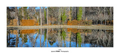 Pond (Ignacio Ferre) Tags: estanque pond lagranjadesanildefonso realsitiodelagranjadesanildefonso sanildefonso segovia españa spain reflejo reflection agua water nikon árboles trees