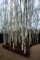 Anglesey Abbey 20th  Feb 2019 trees (Lisa missing Stella) Tags: anglesey abbey cambridgeshire national trust