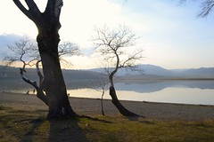 Last days of winter in Tbilisi (bigcrow) Tags: dslr nikon d3100 digital winter chilling warm sunny sunset tree trees lake landscape reflection mountains glare beauty beach lakeside nature