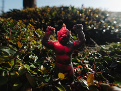 Le Cyclope (Zack Huggins) Tags: dallas texas unitedstatesofamerica us olympustoughtg5 vscofilm pack01 dallastx designdistrict cyclops lecyclope toy figure figurine monster macro bokeh dof pointandshoot compact digitalcompact advancedcompact waterproofcamera waterproofcompact raw closeup microscopemode bush shrub red ledflashlight backlight sunlight sunny toys rayharryhausen monsterinmypocket