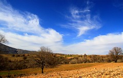 Sky in Kohmoreh (Mahmoud R Maheri) Tags: landscape iran shiraz kohmoreh bluesky clouds scenery trees fields hills