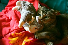 This #Sheep is Mine (Ker Kaya) Tags: sheep cat smileonsaturday fun funny cute sweet softtoy green eyes face portrait smile throughherlens