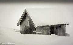 Closed (FotoRoar2013) Tags: 2018 lillehammer fugler januar vinter winter weather white norway norwegen noruega norge norvegia nature natur norwege norvege snow sne snø canon 5dmk3 cold kaldt