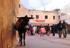 Fès, Morocco, January 2019 D700 527 (tango-) Tags: fes fez marocco morocco maroc 摩洛哥 marruecos марокко المغرب