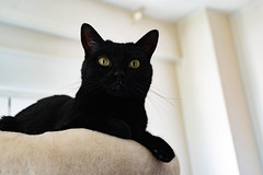 Catniss (and_raw) Tags: cat cute kitten lovely black blackcat