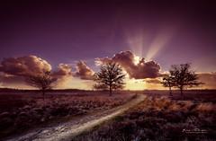 Shiny Sunset (keesvandongen) Tags: heather sunset sunrise dusk dawn naturephotography nature mood light sunlight warm mist misty fog foggy water channel landscape landscapephotography skyscape sky night keesvandongen keske thenetherlands trees woods tree wood twilight