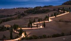 Glowing cypress road (Bilderschmied-Danz) Tags: italien italy toskana tuscany monticchiello blauestunde bluehour nacht night cypress zypresse strase road allee alley leuchtspuren lighttrails phototrip2018 fototour2018 bilderschmied