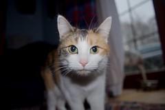 A7 2019 02 12 (Sibokk) Tags: a7 beasts camera cat digital photography scotland sony uk aberdeenshire