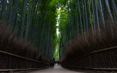 Arashiyama Bamboo Grove - 嵐山竹林の小径 (EriccpSam) Tags: arashiyama bamboo grove 竹林の小径 kyoto 京都 japan 日本 嵐山 country a7iii sony travel people