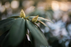 getting warmer (JuNu_photography) Tags: drops warm water plant winter