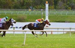 "2017-09-09 (6) r3 Katie Davis on #3 Against the Win for the win (JLeeFleenor) Tags: photos photography md maryland marylandracing laurelpark equine marylandhorseracing jockey جُوكِي ""赛马骑师"" jinete ""競馬騎手"" dżokej jocheu คนขี่ม้าแข่ง jóquei žokej kilparatsastaja rennreiter fantino ""경마 기수"" жокей jokey người horses thoroughbreds equestrian cheval cavalo cavallo cavall caballo pferd paard perd hevonen hest hestur cal kon konj beygir capall ceffyl cuddy yarraman faras alogo soos kuda uma pfeerd koin حصان кон 马 häst άλογο סוס घोड़ा 馬 koń лошадь outside outdoors"