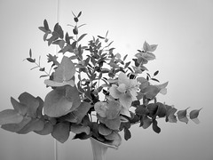 harada-flowers-52 (annie harada) Tags: flowers hana blumen fleurs bouquet noir et blanc black white