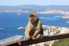 Top of the Rock (polarseamonster) Tags: gibraltar greatbritain rock top monkey barbary strait mediterranean sea harbor port